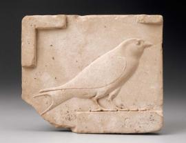 andorinha egipcia