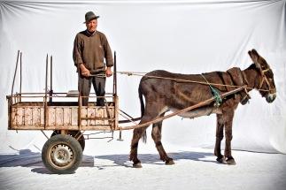 burros-2